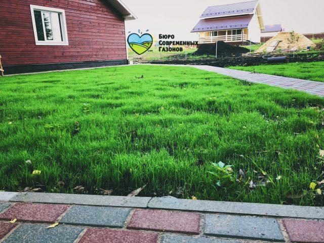 Работы по посеву газона